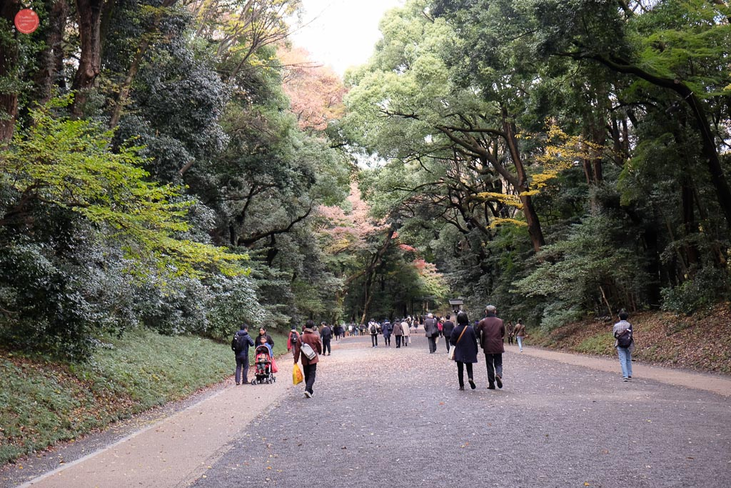 Meiji shrine's gigantic trees.