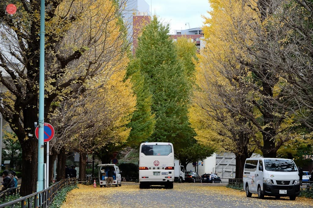 Autumn trees along Meiji Jingu ouutskirts.