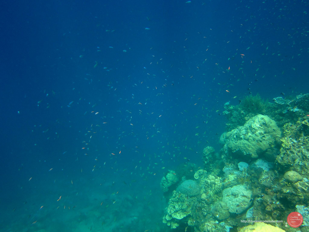 School of fish at Pandan Island
